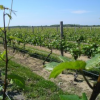 Networking With A View – Parrish Business Council at Bedell Vineyard Wed. June 23