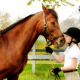 Hamptons Horseback Riding – Stony Hill Stables Saddles Up